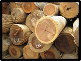 Brazilian Exotic Woods Lumber Ads Fine Woods Importers
